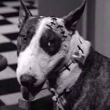 sparky the dog frankenweenie. sparky re-animated! the dog frankenweenie k