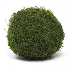 Decorative Moss Balls How A Decorative Moss Ball Can Upgrade Any Room In The House 50