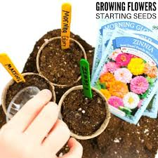 Pay particular attention to foliage color, texture, and habit first, and then select plants for their flower color, size, form, and bloom time second. Easy Flowers To Grow This Spring Little Bins For Little Hands