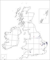 Peucedanum palustre | Online Atlas of the British and Irish Flora