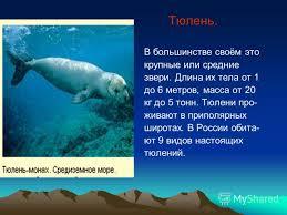 Презентация на тему Красная книга Окружающий мир класс  4 Тюлень
