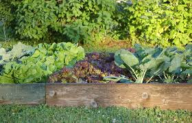 Small Picture Starting Vegetable Garden From Scratch Best Garden Reference