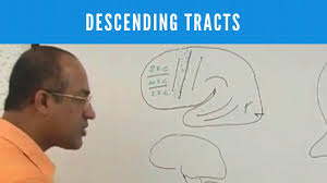 descending tracts corticospinal tract pyramidal extrapyramidal tract