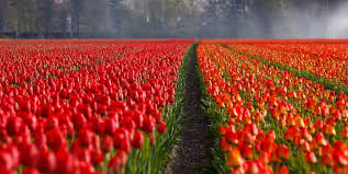 flower wall paper download flower wallpaper images pixabay download free pictures