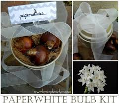 Paper White Flower Bulb Paperwhite Bulb Gift Giving Growing Kit With Printables Forcing