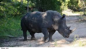 Met uitsterven bedreigde dieren lijst
