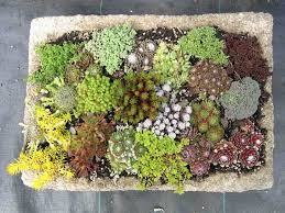Small Picture 48 best trough gardens images on Pinterest Concrete garden