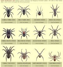 Spider Identification Chart Australia Never Seen This Peppa Pig Episode As It Was Banned In