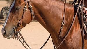 Selecting A Western Breast Collar Horse Rider