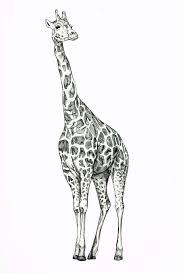 Small Picture Best 20 Giraffe drawing ideas on Pinterest Giraffe art Nursery