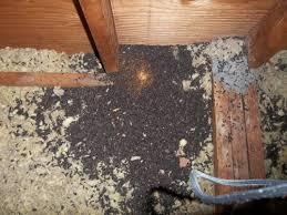bat pest control ct
