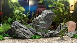 Aquarium Background Pictures Dream Aquarium 37 Fish Tank Backgrounds Download Unique Gifts