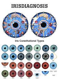 176 Best Iridology Behavior Images Iridology Chart