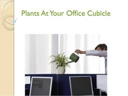 best plants for office cubicle. office cubicle plants 7 best for s