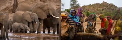 essay human females could should be more like elephant females essay human females could should be more like elephant females national geographic society