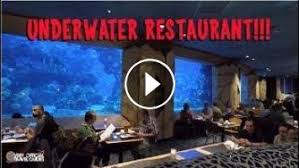 underwater restaurant disney world.  Disney EPCOT At Walt Disney World In Orlando Has Many Great Restaurants We Love  Going To Coral Reef For Itu0027s Chillout Atmosphere And The Views Flyin In Underwater Restaurant