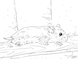 Hamsters Coloring Pages Free Coloring Pages Cute Hamster Coloring