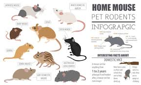 Rodents Lower Classifications 28 Common Types Of Rodents In And Around Your Home