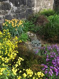 early spring perennials. Simple Perennials Early Spring Color Combo Intended Perennials I