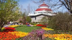 more than 100 000 tulips will flower during zoo blooms at the cincinnati zoo botanical garden