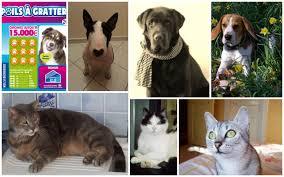 Votez pour votre chien ou chat… à gratter ! • macommune.info