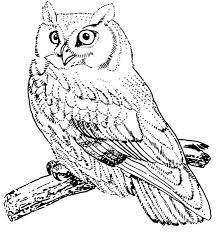 Small Picture Screech Owl Bird Coloring Page Color Luna