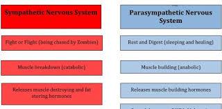 Sympathetic Vs Parasympathetic Nervous System Chart Nclex Quiz