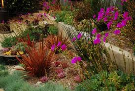 Small Picture California Xeriscape Landscaping Ideas Colorful Drought Tolerant