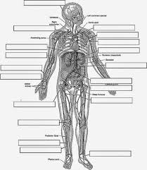 Small Picture Free Printable Human Anatomy Coloring Pages Trendy Free Printable