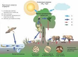 Биосфера Живые организмы на Земле Растения экостистемы