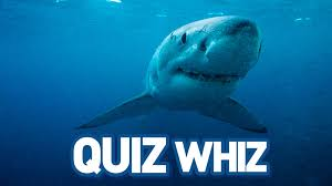 quiz whiz save our sharks quiz whiz save our sharks