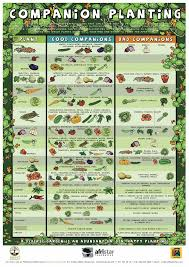 Companion Chart The Ultimate Companion Planting Guide Chart Garden