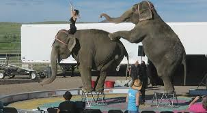 elephant expert dr philip k ensley who has over 30 years of clinical experience working with animals observed two garden bros performances to assess the