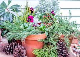 Holiday Container Garden Ideas  Drying Roses Pinecone And DriftwoodContainer Garden Ideas For Winter