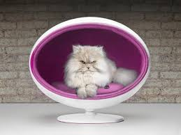 chic and cozy cat beds  modern ideas