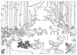 Coloriage Animaux De La Foret Download Coloriage En Ligne Gratuit Coloriage Animaux De La Foret L
