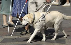 Image result for blind seeing dog