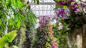 new york botanical garden 2019 orchid show singapore things to do in nyc