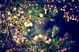 christmas lights photography tumblr. Simple Tumblr Natureu0027s Christmas Lights  By Anna Gorin On Lights Photography Tumblr L
