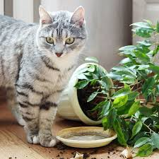 full size of home ideas 7 stylish houseplants that are safe for cats and dogs large