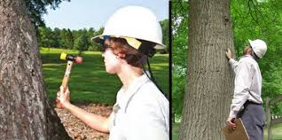 Tree Risk Assessment By The Ohio Tree Doctor