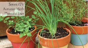 Small Picture How to Grow Culinary Asian Herbs Sage Thyme Lavender
