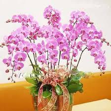 Chúc Mừng Sinh Nhật bác BuiXuanPhuong Images?q=tbn:ANd9GcSdZtHm4ktHax60Zy3k7n2j47mjxuI1nnEtVfjmyRr2PAsuGAed