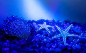 Two starfish and seashells on the ocean ...
