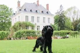 your dog on holiday to france