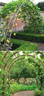 easy and diy garden trellis ideas