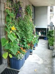 apartment vegetable garden.  Garden Apartment Vegetable Garden Container Gardening Best  Images On Plants Ideas State   Inside Apartment Vegetable Garden A