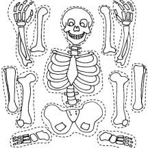 Small Picture Bones Study Coloring SheetsStudyPrintable Coloring Pages Free