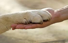 Οι σκύλοι και οι φίλοι...