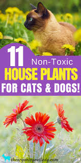 11 house plants safe for cats and dogs